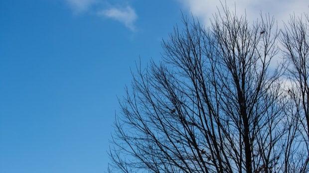 葉っぱの無い冬の木